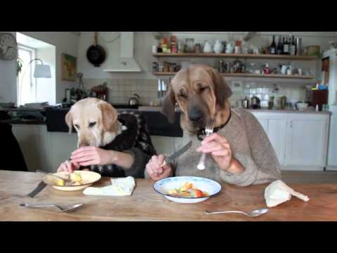 Dogs Eating With a Knife and Fork?