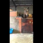 Woman Starts Dancing Before The Horse, Seconds Later My Jaw Hit The Floor!