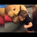 Baby Walks To A Sleeping Pit Bull And Gets Close To His Face. What Happens Next…OMG