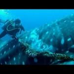 Brave Diver Spots A Massive Shark, When He Gets Closer? OMG