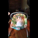 Cat Has More Fun In The Baby Swing Than The Baby!