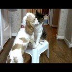 Puppy Tries To Jump On The Chair, But See What The Cat Does!