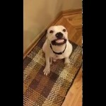 Rescue Dog's Hilarious Response When Owner Says Cheese!